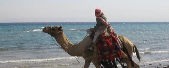 Туры в Египет.Отдых в Табе.