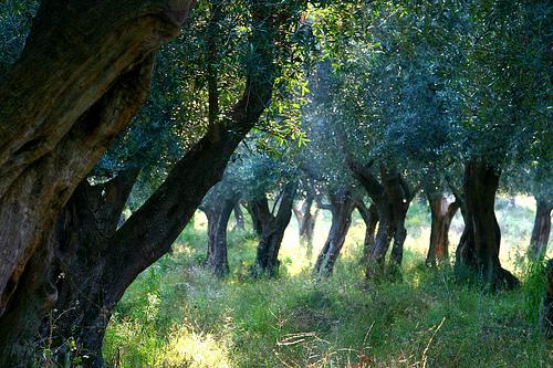 Аграрный туризм в Тоскане