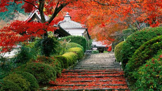 Сад возле отеля Хаят Редженси в Киото, Япония