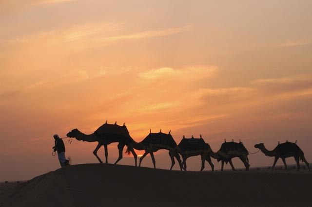 Верблюды отеля Bab Al Shams