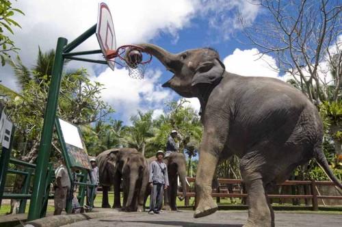 Шоу слонов на Гоа в Индии