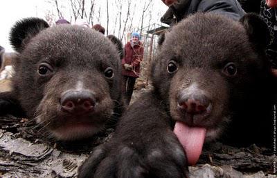 Медвежата в Сафари-парке Геленджика