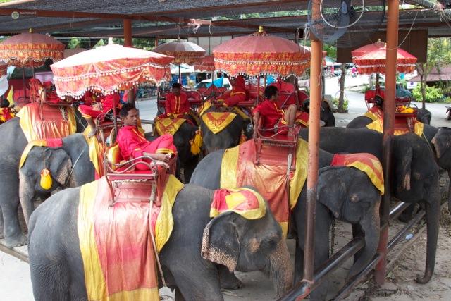 Пхукет Слоны в городе