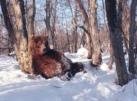 Березинский заповедник зимой
