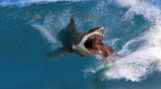 Как меня чуть не съели акулы