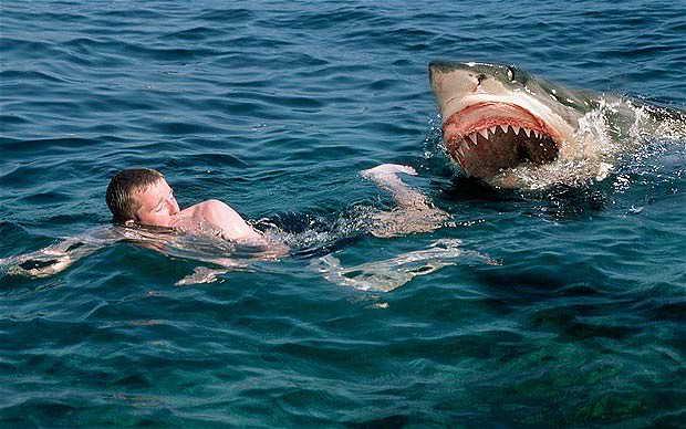 Fatal shark attack wounds