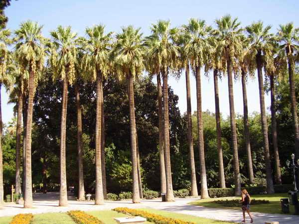 Афины Королевский парк