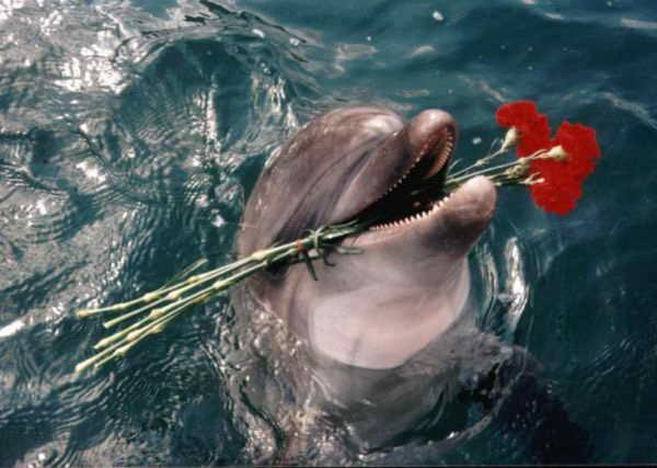 Анапа Дельфинарий
