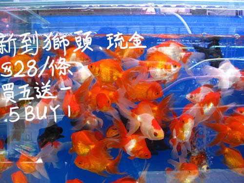 Золотые рыбки Гонконг Китай