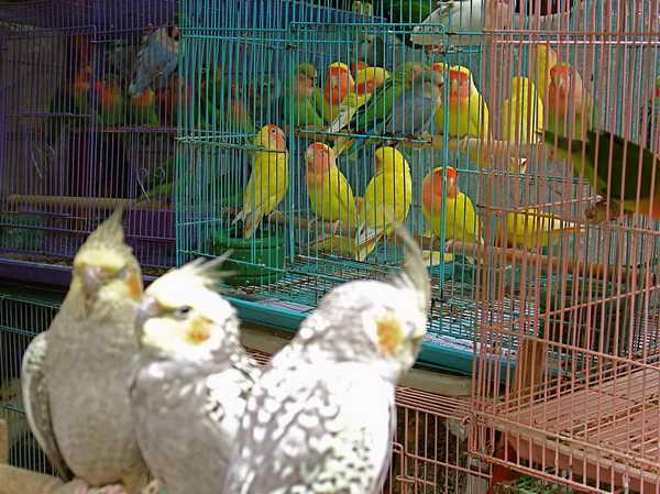Птичий рынок Гонконг