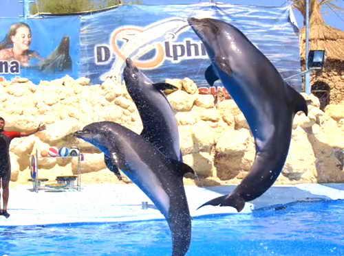 Шарм-эль-Шейх Дельфинарий