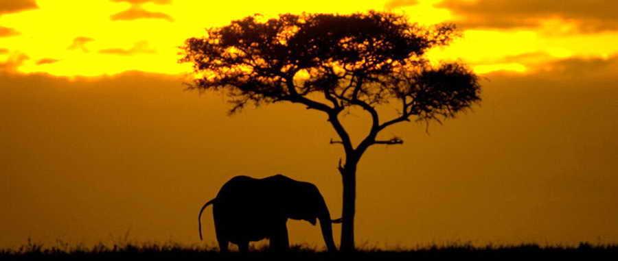 Поездка в Африку