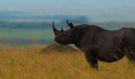 Кения — неизведанные просторы дикой природы