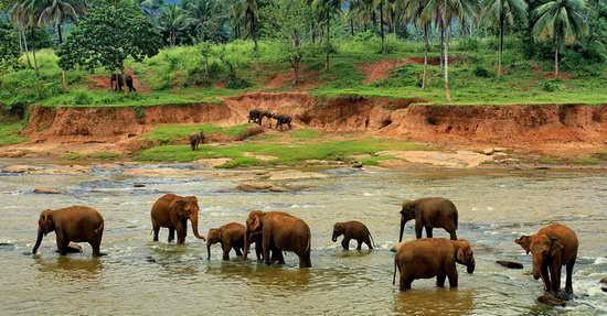 Шри-Ланка Слоновий питомник
