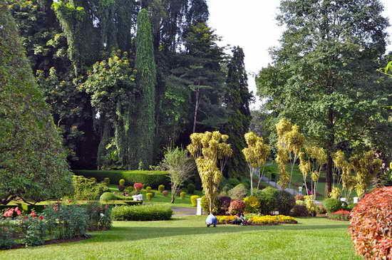 Шри-Ланка Королевский ботанический сад