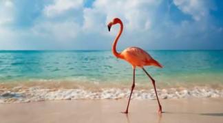 Доминикана — туристический рай Центральной Америки